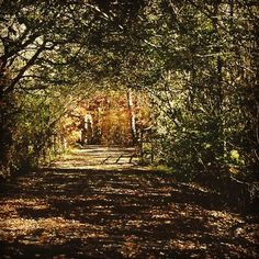 Wooded path leading to a foot bridge,