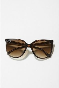 Light brown cat 1000 raybands