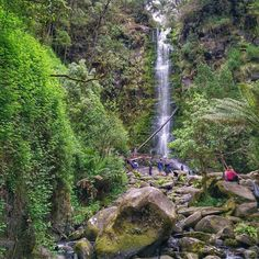 Erskine Falls is a waterfall requiring a mini side-trip along the Great Ocean Road. There is a fenced platform to view the waterfall but when the water volume is low the more adventurous ignore the warning signboard and make their way over the rocks for a close up.  Who else loves waterfalls? by waikaye_