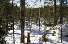 Shiba & forest