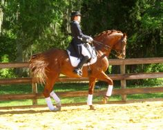 Bretone, Hanoverian stallion at Riverhouse Hanoverians. What strength! Please visit BarnGirl.com