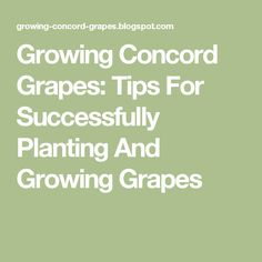 Growing Concord Grapes: Tips For Successfully Planting And Growing Grapes