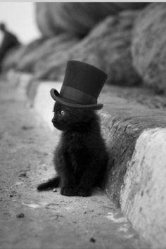 Un gatito negro                                                                                                                                                      Más