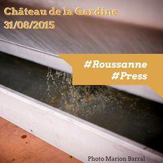 Nous continuons les vendanges des Roussanne qui, immédiatement après la récolte, sont délicatement pressées (pressoir pneumatique) pendant plusieurs heures puis refroidies dans un tank à lait pour le débourbage. ----------------------------- We keep on harvesting our Roussanne which are pressed right after the harvest. We press them gently using a pneumatic press and cool them down in a milk tank for settling.   Photos Marion Barral