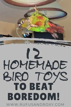 12 Quick & Easy DIY Bird Toys to Beat Boredom! These homemade bird toy ideas are perfect for all types of pet birds - conures, parakeets, cockatiels, lovebirds, parrots and more! You will love learning how to make bird toys to keep your feathered friends Diy Budgie Toys, Diy Parrot Toys, Parakeet Toys, Diy Bird Toys, Parrot Pet, Types Of Pet Birds, Homemade Bird Toys, Bird Breeds, Budgies