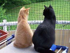 Aussichtsplateaus für Balkon...Ideen gesucht! - Katzen Forum