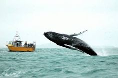 West Cork :: Whale watching in the bay!