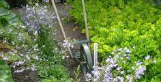 Ronny is telling you:'Gärten in England  West Dean'