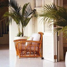 I like the big white pot the plant is in. I should put my plants in big pots like this.
