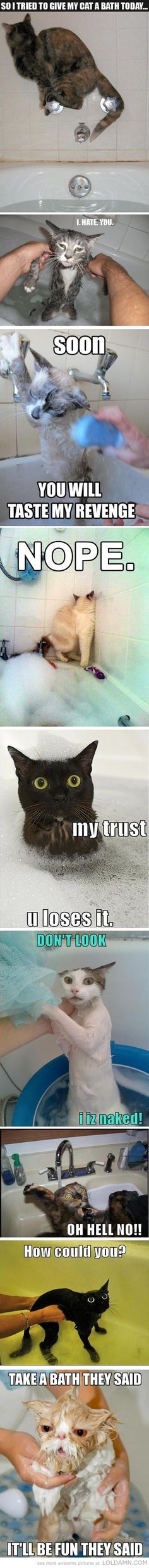 Funny cat bath pictures