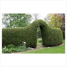 great shape to this hedge arch