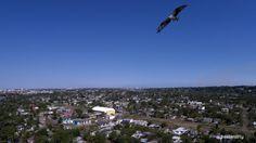 33. Pueblo Viejo, Veracruz. Águila pescadora volando sobre Pueblo Viejo, #Veracruz