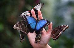 We delight in the beauty of the butterfly, but rarely admit the changes it has gone through to achieve that beauty!