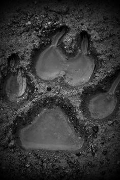 Inspo // Werewolves