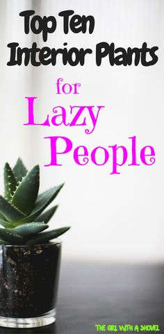 Low-Maintenance Houseplants | Indoor Plants for Lazy People | Easy Indoor Plants | Hard to Kill Houseplants |