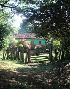 Roça lirios do campo.: Pintei minha casa de verde porque diz que da esper...