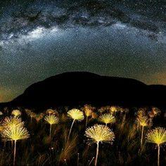 Um fenômeno tipicamente brasileiro - As flores do cerrado que brilham como estrelas - by Marcio Cabral