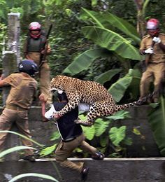 Leopard attacks villagers in India. Kinda crazy, but tell me that Leopard doesn't look awesome!