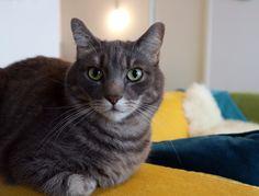 Pakollinen kissakuva. Tässä toinen kissamme Nooa.