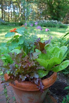 Ornamental vegetable garden