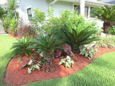 Landscaping with Caladiums   This plant grouping in the front landscape of the Smith residence on ...