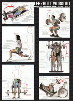 Leg But Workout - Healthy Fitness Exercises Gym Low Body - Yeah We Train ! Leg Butt Workout, Butt Workouts, Fitness Exercises, Body Exercises, Mommy Workout, Muscle Fitness, Mens Fitness, Fitness Tips, Muscle Food
