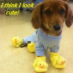 Amazing Animals I THINK YOU LOOK CUTE TOO!  LOVE THE BOOTIES!