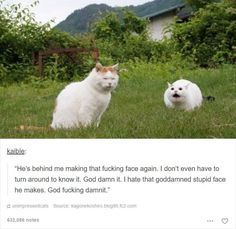 So many cats so little time. Here are 48 of the best responses to cats doing some pretty questionable things.