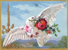 bird+and+roses+pictures | Vintage Bird Image - White Dove with Roses - Graphics Fairy