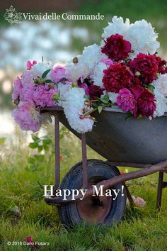Happy May!  Share if you like it! #peonies