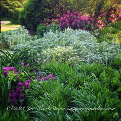 A garden bed in a NY garden using a variety of perennials and groundcovers.   Landscape design and construction services in the NY and NJ areas.  Summerset Gardens Elegant Landscape Design, Fine Workmanship   845-590-7306  http://www.summersetgardens.com