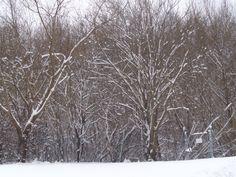 Snowy Austria parks