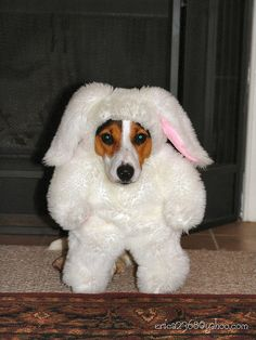 I think I'm a rabbit!!!  What do you think?????