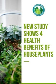 You might be interested in houseplants because they're beautiful, and honestly, that's reason enough to keep them around. But did you know about the physical and mental health benefits of houseplants? Houseplants aren't just a pretty Mental Health Benefits, Improve Mental Health, House Plant Care, House Plants, Types Of Houseplants, Fiddle Leaf Tree, Inside Plants, Small Plants