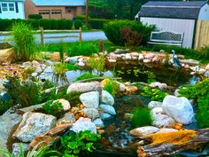A gorgeous 16x21 Koi Pond. Full of aquatic plants and koi fish.  For more info visit: www.iloveponds.com/water-features/koi-pond.html