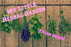 Live, Life and Dream: Video - My Little Herbal Garden