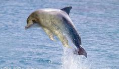 what the... what the heck... WHAT IS THIS?!   its the majestic Sloth Dolphin!!! XD  ~Juliet W.