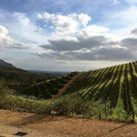 With views of Simonsberg Mountain, abundant olive groves & beautiful vineyards, TOKARA Delicatessen offers a relaxed & child-friendly environment in which to enjoy a delicious breakfast or a light and seasonal lunch. Child Friendly, Deli, South Africa, Vineyard, Environment, Mountain, Lunch, Breakfast, Outdoor