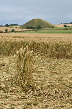 Crop Circle at West Kennett Longbarrow (2), Nr Avebury, Wiltshire. Reported 28th July 2016