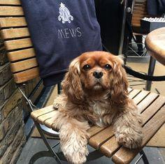 Lola at Mews of Mayfair
