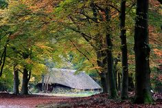 sheepshed in the forest of the Veluwe (NL)