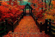 Autumn at the Bridge by Indy Kethdy on Flickr.