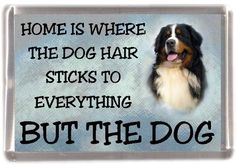 retro pictures of bernese mountain dogs - Google Search