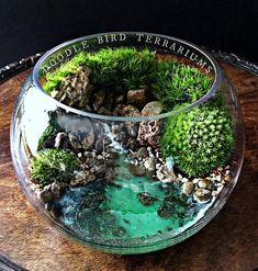 Ocean Scene Bowl Terrarium with Live Plants- A tropical seascape scene is plan. - Ocean Scene Bowl Terrarium with Live Plants- A tropical seascape scene is planted using live moss -