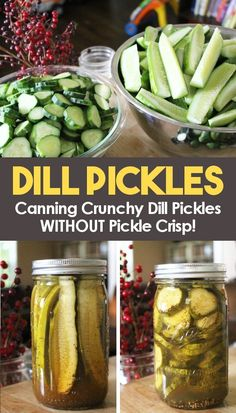 Crunchy Dill Pickles without Pickle Crisp! Canning crunchy dill pickles is easy with this recipe! Homemade sliced hamburger dill pickles, and crispy dill spear can be yours with this simple water bath canning recipe! Canning Dill Pickles, Crunchy Dill Pickle Recipe, Crispy Pickles Recipe, Hamburgers, Sauces, Water Bath Canning, Home Canning, Easy Canning, Pickling