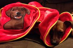 41 Insanely Clever Products Your Dog Deserves To Own