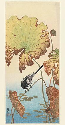 Ohara Koson -Ohara Koson, Wagtail and Lotus, between 1912 and 1918, woodblock print, 37.7 × 16.4 cm. Brooklyn Museum- Wikipedia, the free encyclopedia