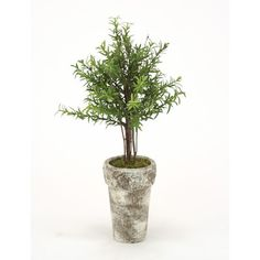 Distinctive Designs Silk Double Rosemary Topiary in French Pot & Reviews | Wayfair