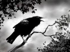 crow raven art print RAVEN SONG bird art wildlife art by lewfoster, $15.00