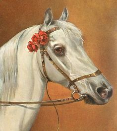 Alf Schonian - Postcard, White riding horse with red rosette - 1907 - via TuckDB